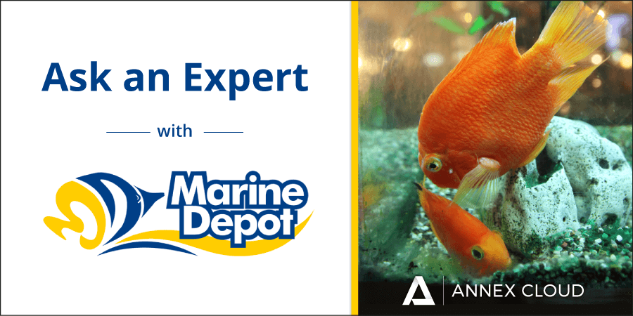 ask an expert: marine depot and customer loyalty